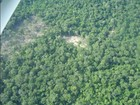 Ideflor faz licitação para concessão na Floresta Estadual do Paru, no PA
