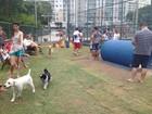 Praça para cães é inaugurada em Jardim Camburi, em Vitória, ES