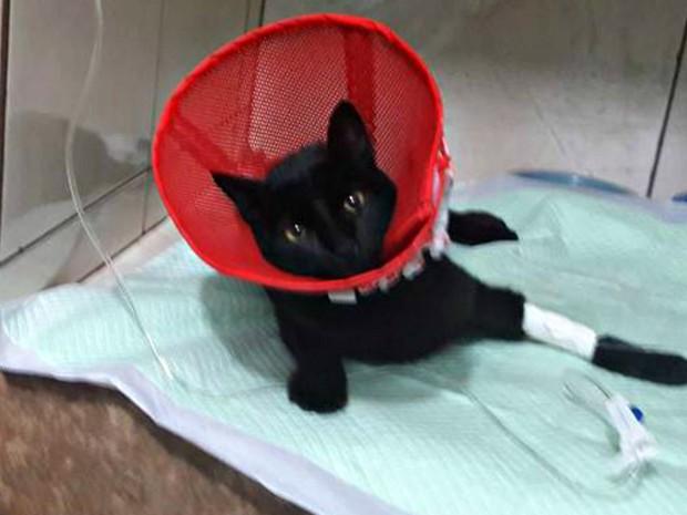 Gata foi resgatada na Avenida Ipiranga e está recebendo tratamento (Foto: Divugação/Clínica Veterinária do Povo)