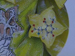 Substância tóxica da carambola pode causar insuficiência renal, diz estudo da USP de Ribeirão Preto (Foto: Maurício Glauco/EPTV)