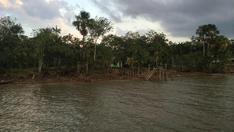 floresta_rio_para (Foto: Vinicius Arruda/Arquivo Pessoal)