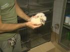 Coruja tirada do ninho por traficantes ganha vida nova em zoo de Ribeirão
