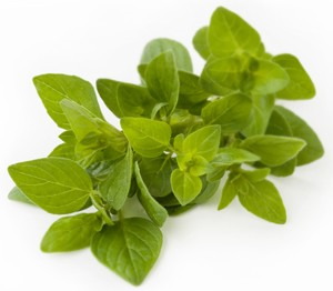 Fresh oregano bunch (Foto: Getty Images/iStockphoto)