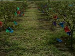Saiba como cuidar das plantas (Foto: Reprodução/ TV Gazeta)