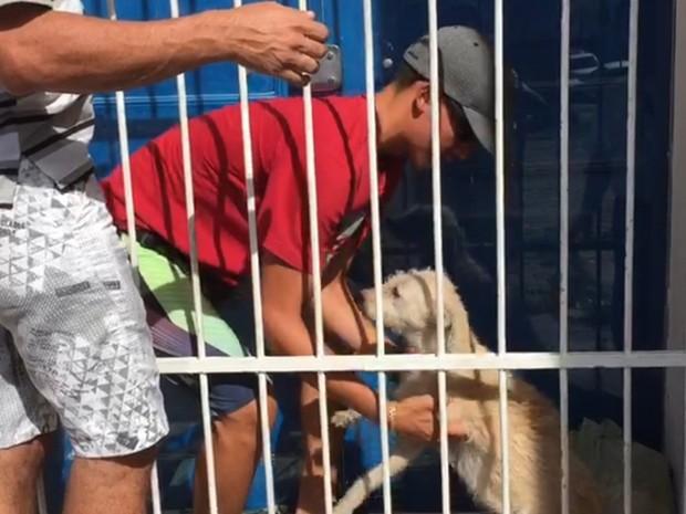 Cachorro foi abandonado entre porta lacrada e grade de proteção no Palácio do Bispo (Foto: Walter Paparazzo/G1)