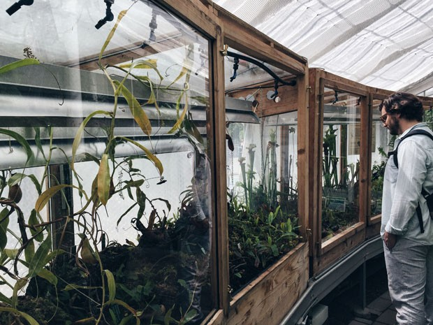 (Foto: Flo Atelier Botânico)