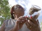 Infestação de caramujo atinge bairro de Itapetininga: 'Não temos instrução'