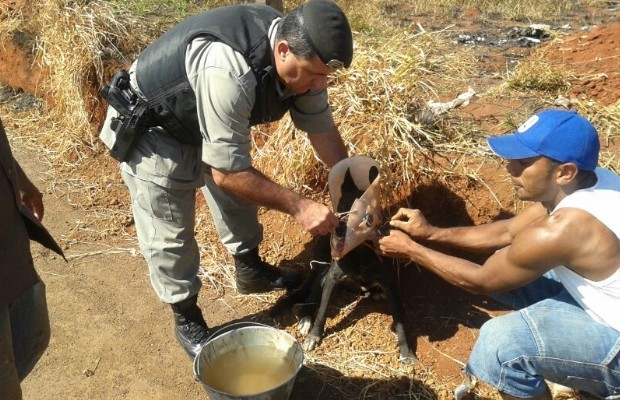 Morador da região ajudou no resgate e adotou o animal (Foto: Divulgação/PM)