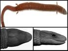 Nova espécie rara de lagarto é achada em floresta remota no Amapá