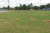 Com futebol parado, CSA se organiza para reformas no CT Gustavo Paiva