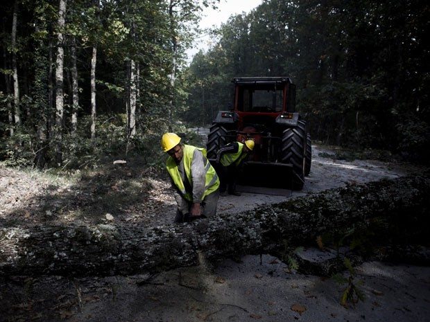 Trabalhador corta árvore em floresta próxima à mina Ierissos, na Grécia (Foto: Angelos Tzortzinis/The New York Times)