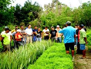 Formação de Jovens Empreendedores Rurais (Foto: Divulgação/ADEL)