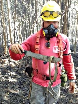 Cobras, tamanduás e quelênio foram vítimas das chamas  (Foto: Divulgação/ Defesa Civil)