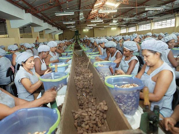 Usina em Belém beneficia castanha-do-pará vinda de Almeirim Pará (Foto: Ary Souza/ O Liberal)