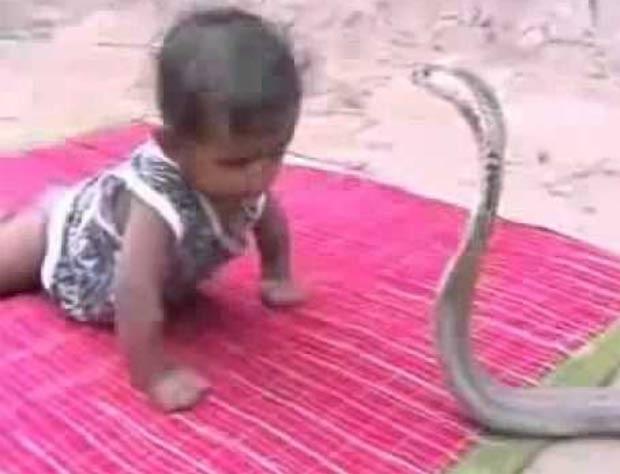 Em 2007, um vídeo de um bebê de um ano que foi forçado a lutar com uma cobra durante um ritual de encantamento de serpentes na Índia provocou indignação em todo o mundo. (Foto: Reprodução)