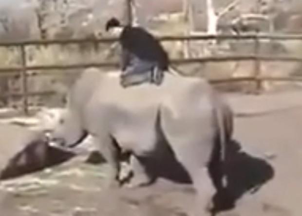 Americano subiu nas costas do animal, para simular um 'rodeio' (Foto: Reprodução)