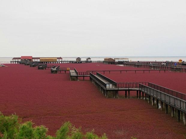Ação da natura transforma a cor do litoral de Panjin  (Foto: Reprodução)