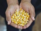 Estoque internacional de milho impedirá maior valorização no Brasil