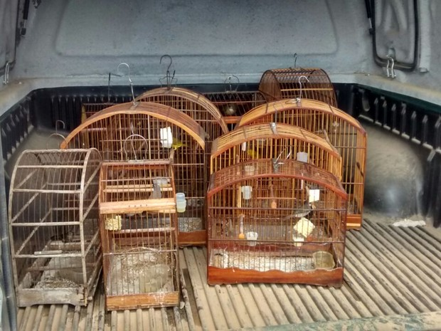 Pássaros apreendidos em Itaboraí, RJ (Foto: Divulgação/Disque-Denúncia)