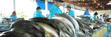 Em Santarém, falta de peixe preocupa Colônia Z-20  (Zé Rodrigues/TV Tapajós)