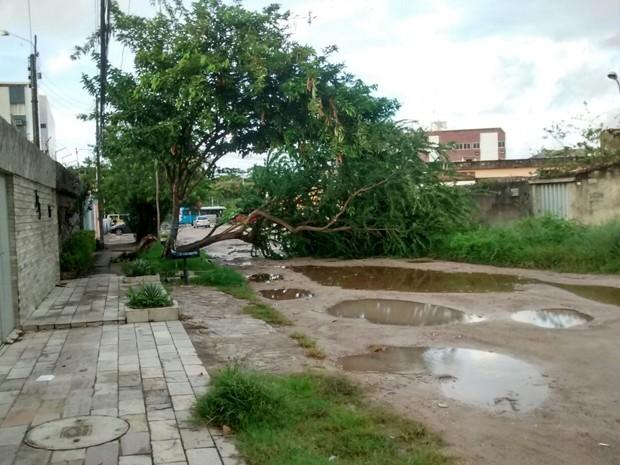 Árvore caída bloqueia rua no bairro da Imbiribeira (Foto: Reprodução/ Whatsapp)