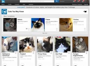 Linkedin ganha versão para gatos em brincadeira (Foto: Divulgação/Linkedin)