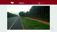 VC no ESTV: telespectador registra animais soltos em estrada no Norte do ES