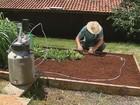 Embrapa cria um sistema de irrigação que economiza água e energia elétrica