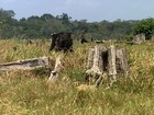 Paragominas, no PA, vira exemplo de desenvolvimento sustentável