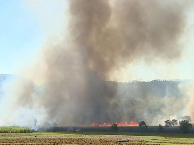 Fogo destruiu 2 hectares de canavial em Ribeirão Bonito (Foto: Ely Venâncio/EPTV)