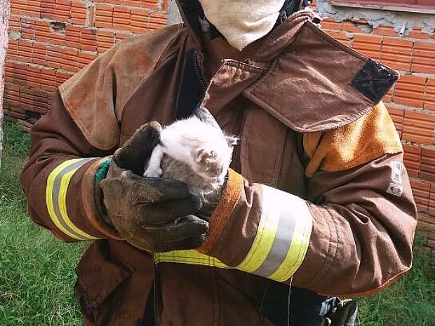 Filhote de gato foi resgatado pelo Corpo de Bombeiros (Foto: Divulgação/Corpo de Bombeiros)