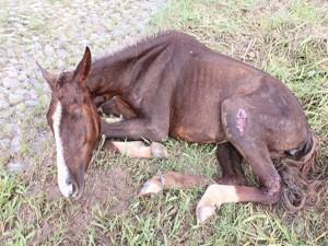 Égua não conseguia bnem se levantar (Foto: Luciana Regina/Divulgação)