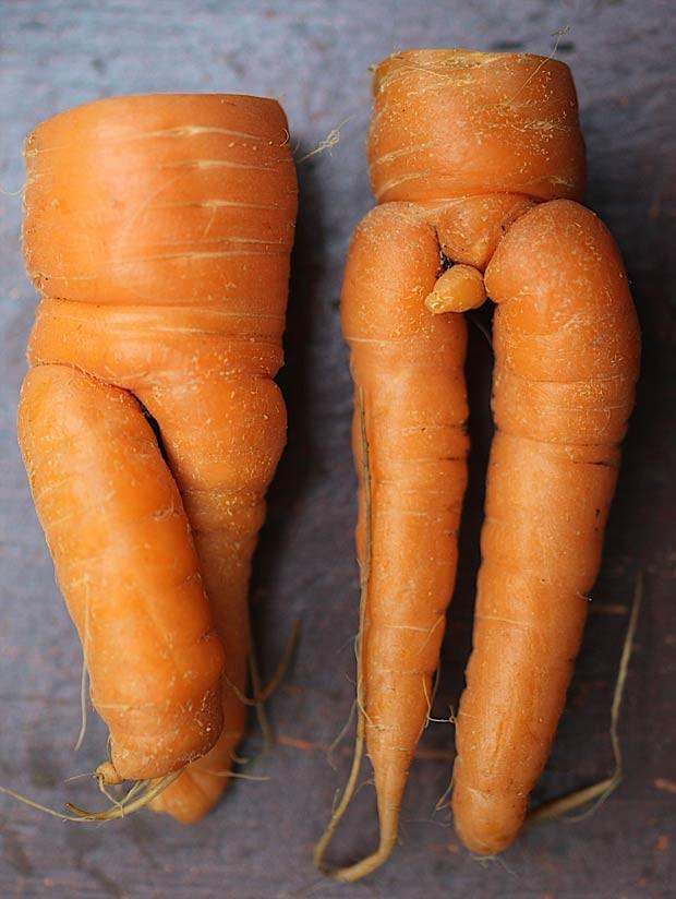Em 2011, o casal Gerry e Kate Stockton colheu duas cenouras em formatos inusitados em Stockport, no Reino Unido. Os dois vegetais lembram as formas de um homem e uma mulher. O 'legume macho' conta, inclusive, com uma haste como se fosse um pênis. Já a outra cenoura apresenta duas 'pernas' cruzadas. (Foto: Worldwide Features/Barcroft Media/Getty Images)