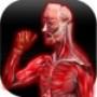 Músculos Anatomia