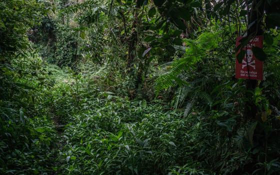 Alto del Oso, um dos campos mapeados pela iniciativa de desminado humanitário. Pelo local, só se transita por um estreito caminho de terra entre a mata fechada. (Foto:  Federico Rios Escobar/ÉPOCA)