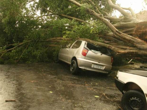 Em Paranapanema, árvore caou sobre um carro (Foto: TEM Você / Alessandra Moraes)