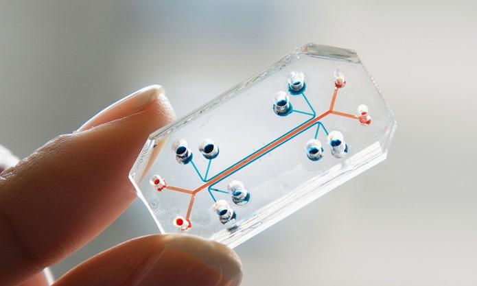 Este dispositivo pode representar o fim dos testes em animais (Foto: Reprodução/Wyss Institute)