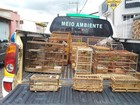 Polícia Ambiental apreende pássaros e detém homem em Itapecerica