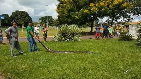 Sucuri com mais de 4 metros é achada em praça de Três Fronteiras