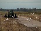 Reserva do Taim une preservação ambiental e produção de arroz