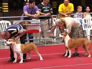 Feira internacional de cães em Goiânia (Foto: Reprodução/TV Anhanguera)