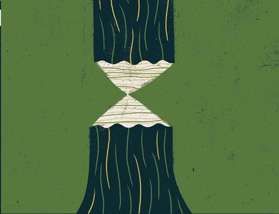 Meio Ambiente Florestas (Foto:  Ilustração André Ducci)