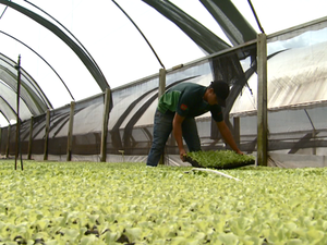 Setor agrícola apresenta saldo positivo de contratações  (Foto: Reprodução/ EPTV)