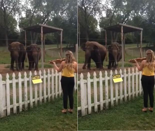 Casal elefantes foi filmado dançando enquanto violinista tocava música de Bach (Foto: Reprodução/YouTube/Eleanor Bartsch)