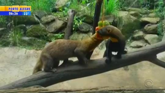 Animais ganham picolés em dias de calor no zoológico de Gramado