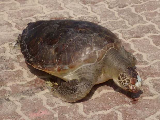 Animal estava morto quando foi encontrado por banhistas (Foto: Marcello Farias/ Salvemos São Conrado)
