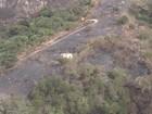 Voluntários e Bombeiros monitoram  incêndio em Taquaritinga do Norte
