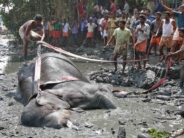 Uma corda é jogada para que o homem a amarre em volta do elefante (Foto: Sivaram V/Reuters)