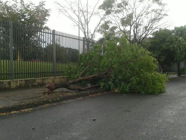 Corpo de Bombeiros registrou 20 ocorrências de quedas de árvores nesta sexta-feira (2) (Foto: Kaito Lomartine/Cedida)
