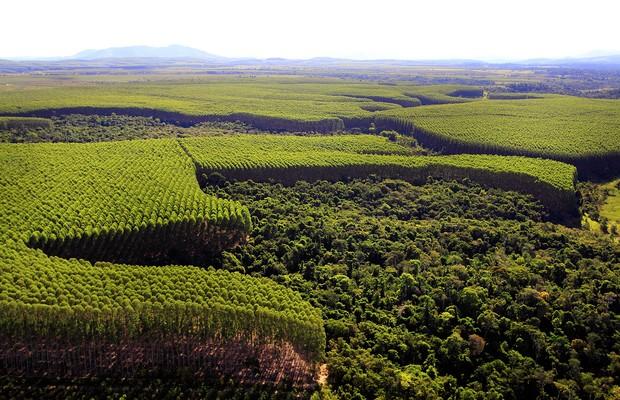 Resultado de imagem para area de reflorestamento na bahia da suzano